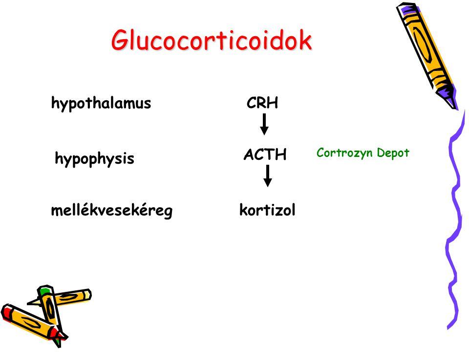 A kortizol szintézise