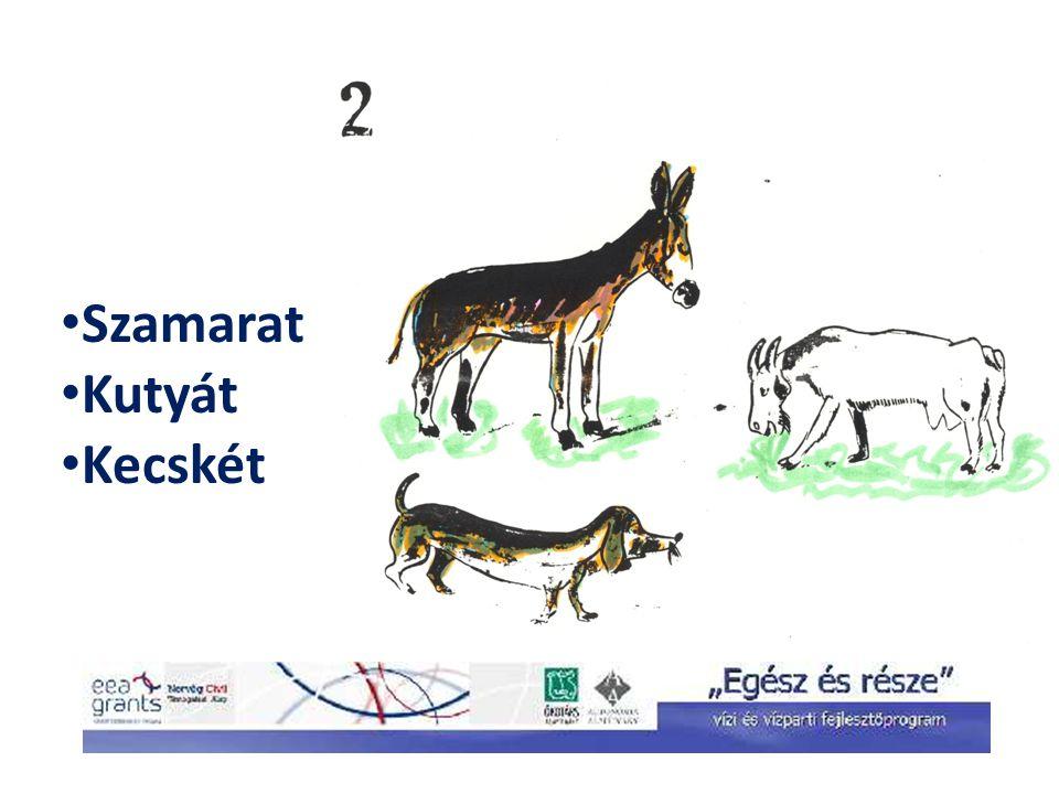 Szamarat Kutyát Kecskét