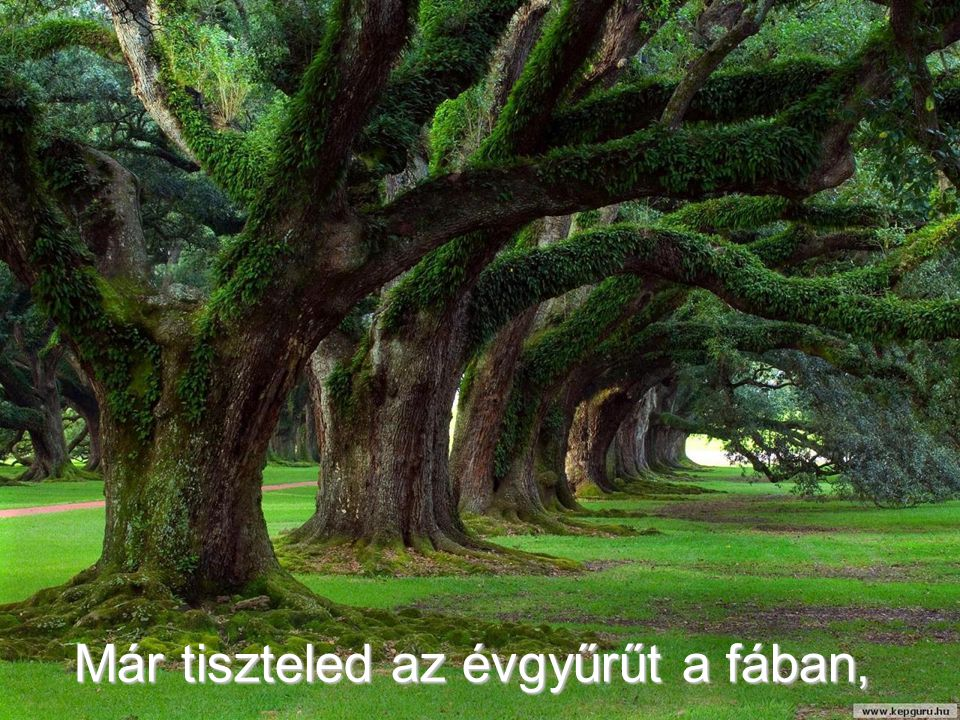 Már tiszteled az évgyűrűt a fában,