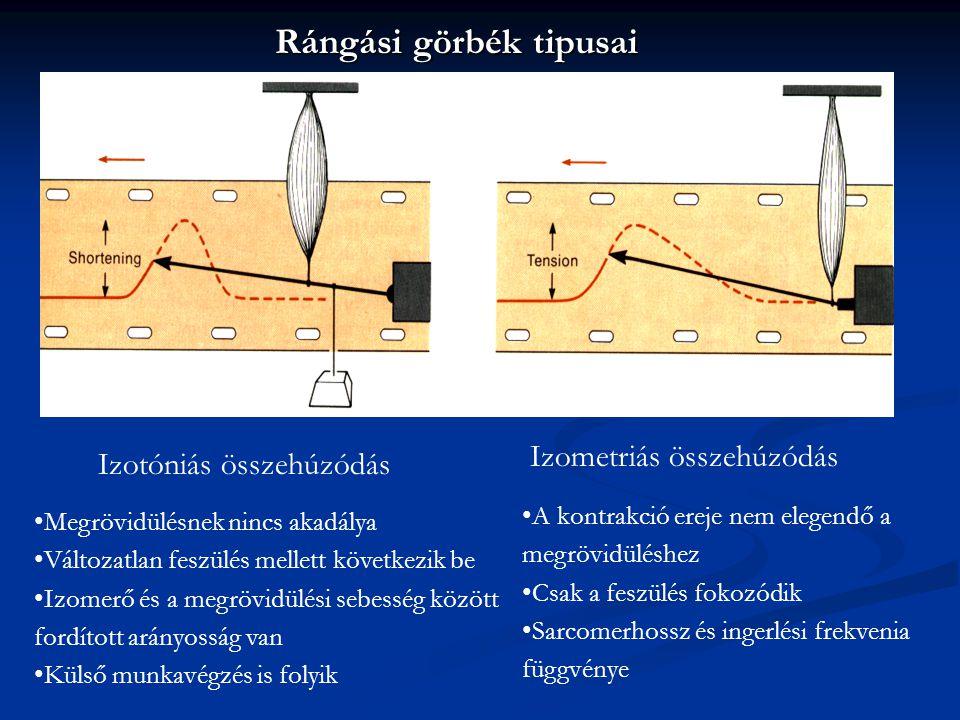 Rángási görbék tipusai Izotóniás összehúzódás Izometriás összehúzódás Megrövidülésnek nincs akadálya Változatlan feszülés mellett következik be Izomer