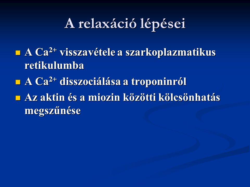 A relaxáció lépései A Ca 2+ visszavétele a szarkoplazmatikus retikulumba A Ca 2+ visszavétele a szarkoplazmatikus retikulumba A Ca 2+ disszociálása a
