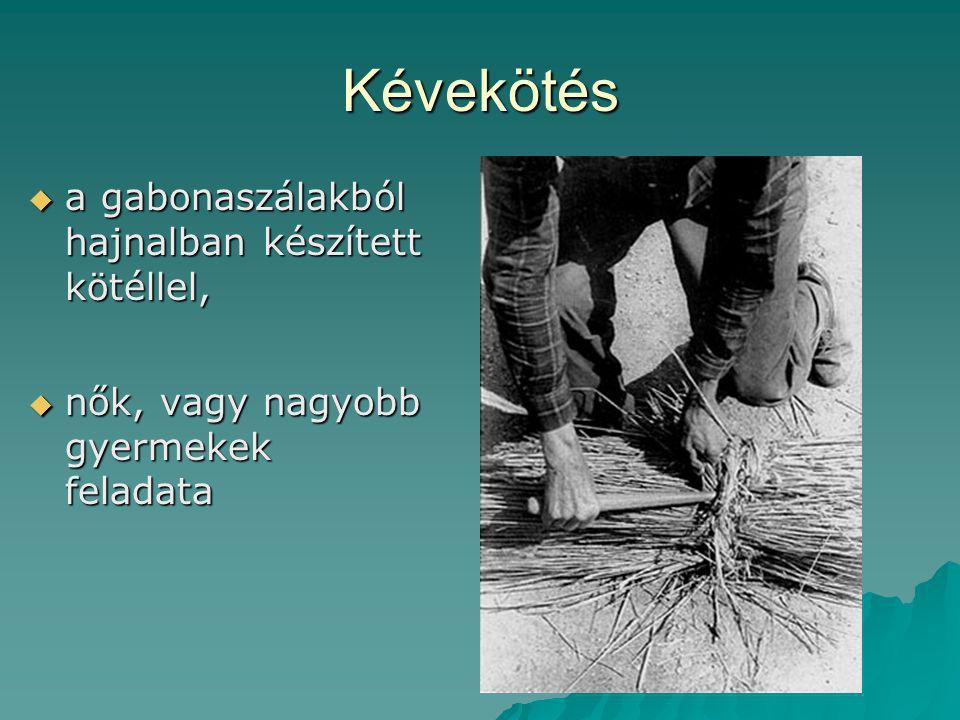 Kévekötés  a gabonaszálakból hajnalban készített kötéllel,  nők, vagy nagyobb gyermekek feladata