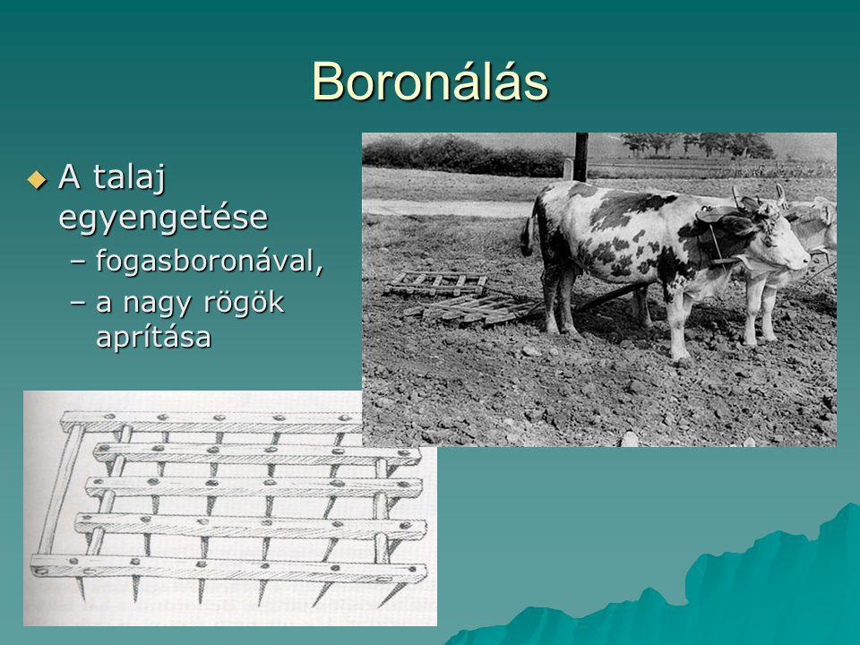 Boronálás  A talaj egyengetése –fogasboronával, –a nagy rögök aprítása