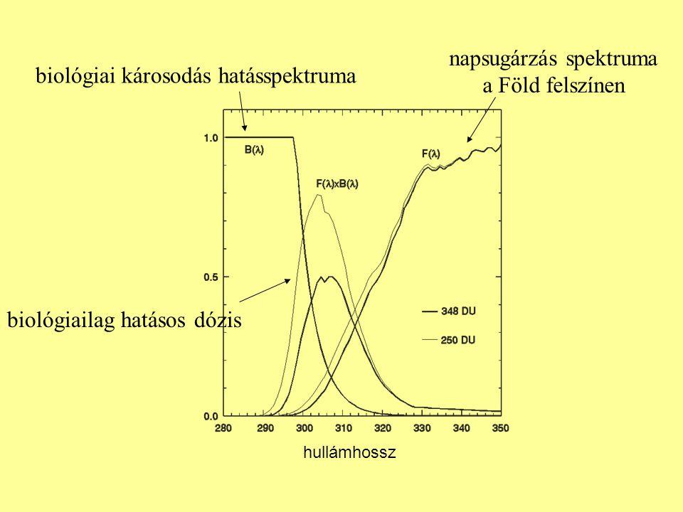 biológiai károsodás hatásspektruma napsugárzás spektruma a Föld felszínen biológiailag hatásos dózis hullámhossz