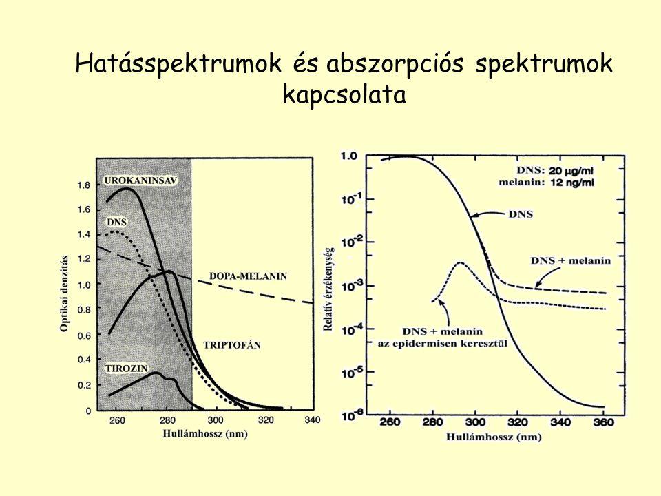 Hatásspektrumok és abszorpciós spektrumok kapcsolata