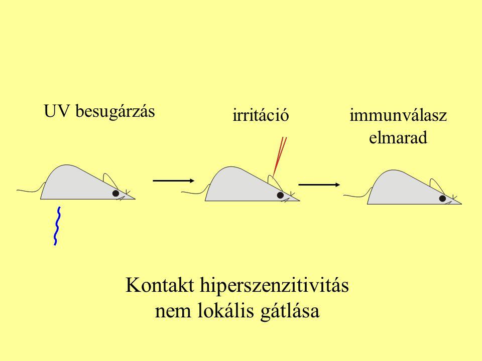 irritációimmunválasz elmarad UV besugárzás Kontakt hiperszenzitivitás nem lokális gátlása