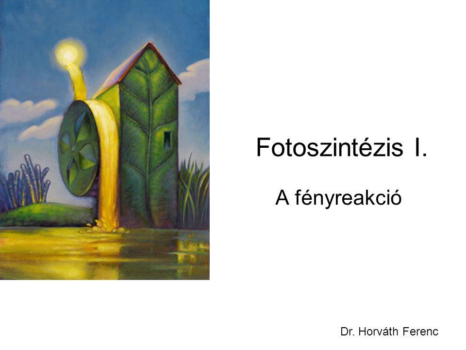 Fotoszintézis I. A fényreakció Dr. Horváth Ferenc