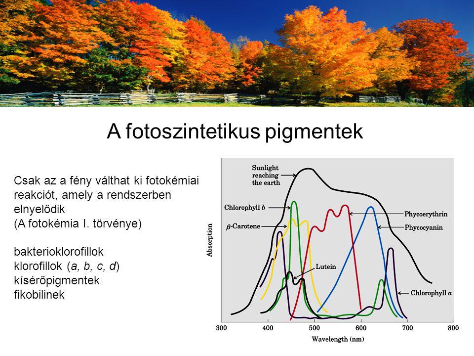 Csak az a fény válthat ki fotokémiai reakciót, amely a rendszerben elnyelődik (A fotokémia I.