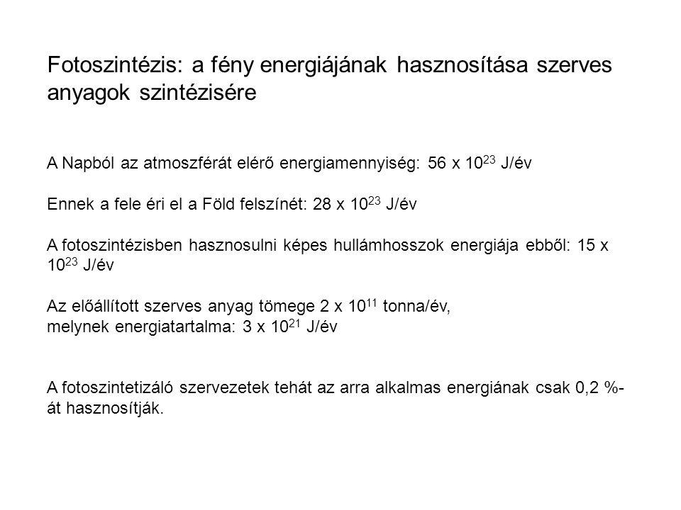 Fotoszintézis: a fény energiájának hasznosítása szerves anyagok szintézisére A Napból az atmoszférát elérő energiamennyiség: 56 x 10 23 J/év Ennek a fele éri el a Föld felszínét: 28 x 10 23 J/év A fotoszintézisben hasznosulni képes hullámhosszok energiája ebből: 15 x 10 23 J/év Az előállított szerves anyag tömege 2 x 10 11 tonna/év, melynek energiatartalma: 3 x 10 21 J/év A fotoszintetizáló szervezetek tehát az arra alkalmas energiának csak 0,2 %- át hasznosítják.