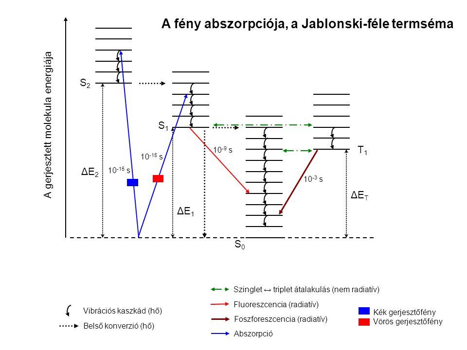 ΔE2ΔE2 T1T1 ΔETΔET ΔE1ΔE1 S1S1 S2S2 S0S0 A gerjesztett molekula energiája Vibrációs kaszkád (hő) Belső konverzió (hő) Szinglet ↔ triplet átalakulás (nem radiatív) Fluoreszcencia (radiatív) Foszforeszcencia (radiatív) Abszorpció A fény abszorpciója, a Jablonski-féle termséma Kék gerjesztőfény Vörös gerjesztőfény 10 -15 s 10 -9 s 10 -3 s