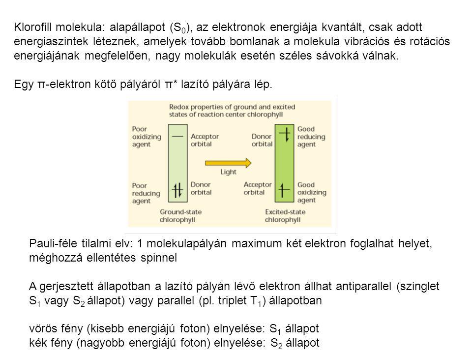 Klorofill molekula: alapállapot (S 0 ), az elektronok energiája kvantált, csak adott energiaszintek léteznek, amelyek tovább bomlanak a molekula vibrációs és rotációs energiájának megfelelően, nagy molekulák esetén széles sávokká válnak.