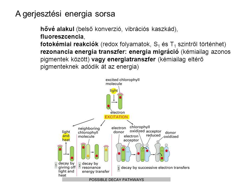 A gerjesztési energia sorsa hővé alakul (belső konverzió, vibrációs kaszkád), fluoreszcencia, fotokémiai reakciók (redox folyamatok, S 1 és T 1 szintről történhet) rezonancia energia transzfer: energia migráció (kémiailag azonos pigmentek között) vagy energiatranszfer (kémiailag eltérő pigmenteknek adódik át az energia)