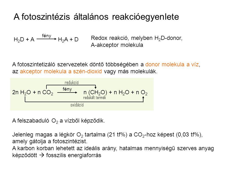 A fotoszintézis általános reakcióegyenlete H 2 D + A H 2 A + D Redox reakció, melyben H 2 D-donor, A-akceptor molekula fény A fotoszintetizáló szervezetek döntő többségében a donor molekula a víz, az akceptor molekula a szén-dioxid vagy más molekulák.