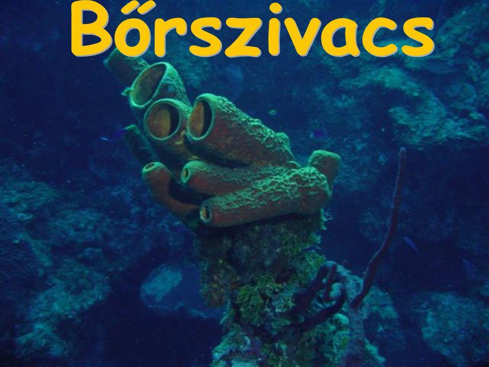 A tengerben élő csigák többsége házzal rendelkezik.