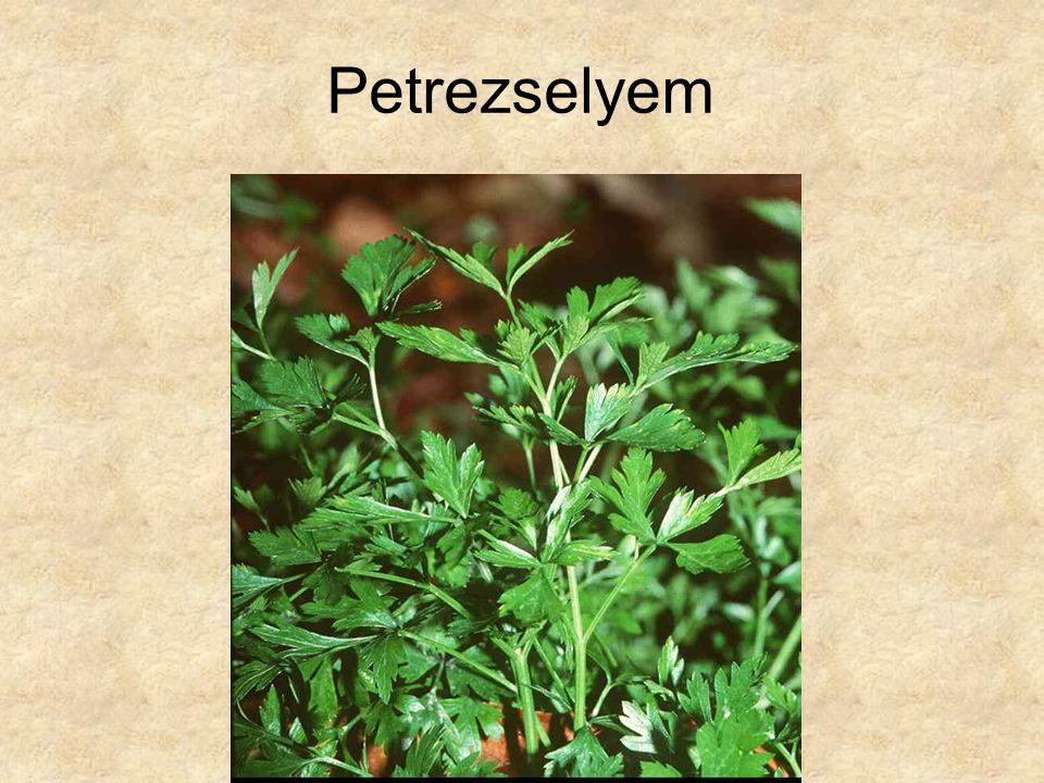 Petrezselyem