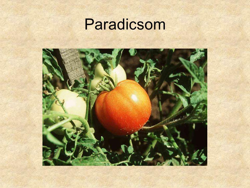 Paradicsom