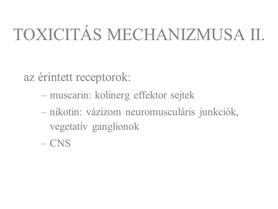 az érintett receptorok: –muscarin: kolinerg effektor sejtek –nikotin: vázizom neuromusculáris junkciók, vegetatív ganglionok –CNS TOXICITÁS MECHANIZMU