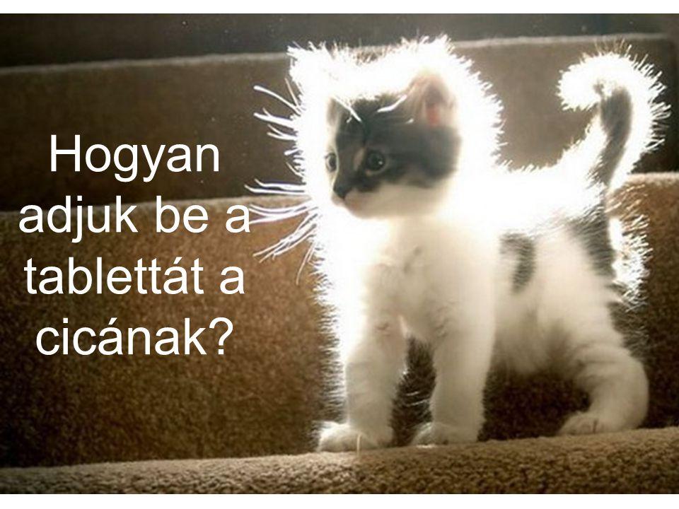 Hogyan adjuk be a tablettát a cicának