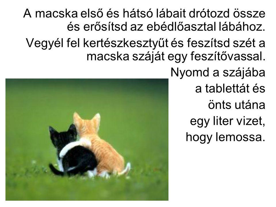 A macska első és hátsó lábait drótozd össze és erősítsd az ebédlőasztal lábához.