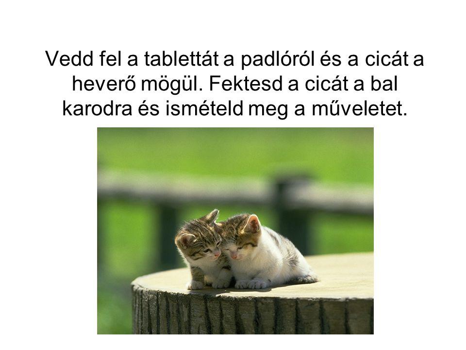 Vedd fel a tablettát a padlóról és a cicát a heverő mögül.