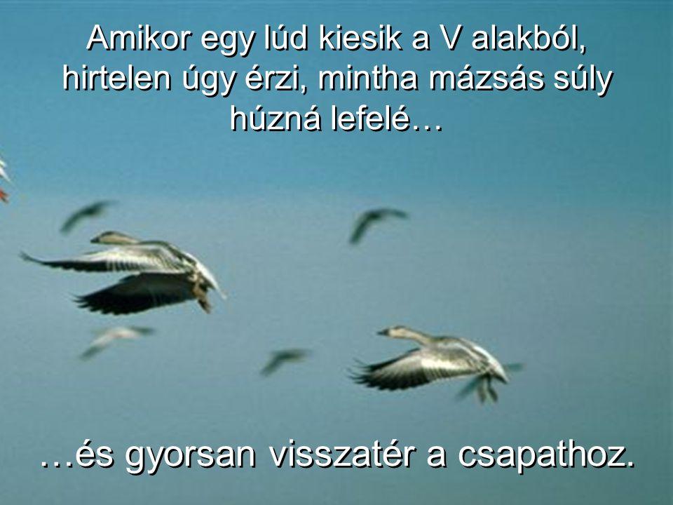 Amikor egy-egy madár suhint egyet a szárnyával, felhajtóerőt képez az őt követő madár számára. Egy V alakban, az egész csapat legkevesebb 71 %-kal hos