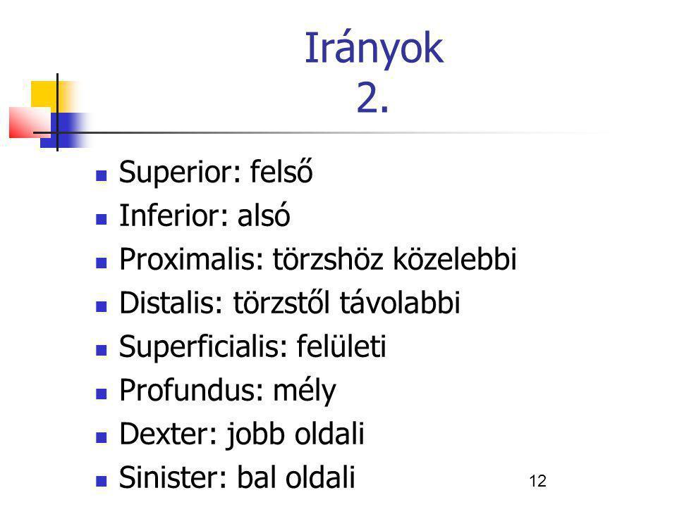 12 Irányok 2. Superior: felső Inferior: alsó Proximalis: törzshöz közelebbi Distalis: törzstől távolabbi Superficialis: felületi Profundus: mély Dexte