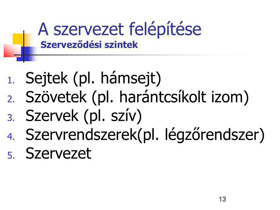 13 A szervezet felépítése Szerveződési szintek 1. Sejtek (pl. hámsejt) 2. Szövetek (pl. harántcsíkolt izom) 3. Szervek (pl. szív) 4. Szervrendszerek(p
