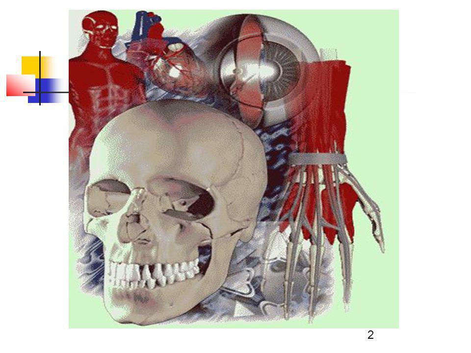 33 3.Szerv Többféle, meghatározott funkciót ellátó szövetből épül fel.