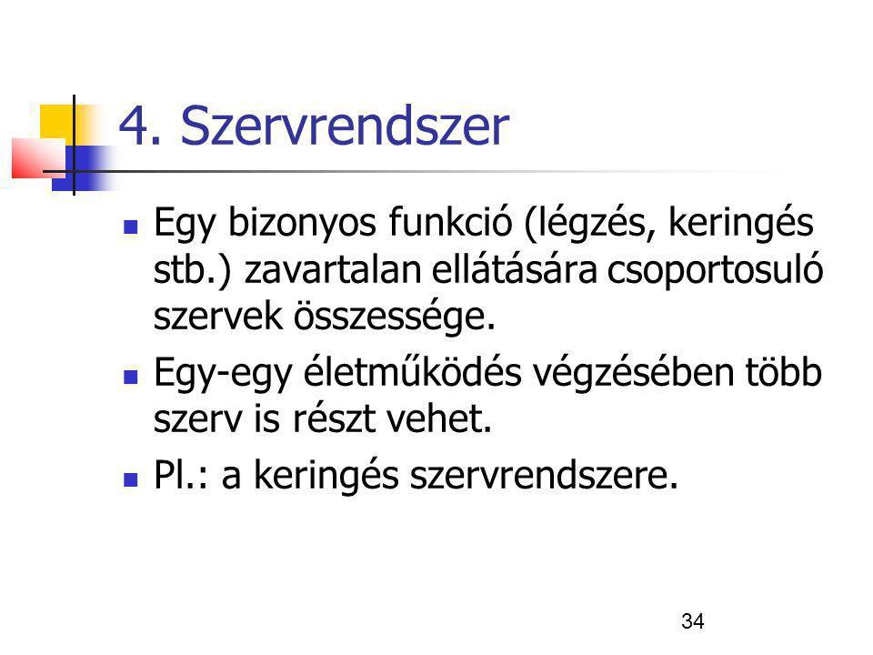 34 4. Szervrendszer Egy bizonyos funkció (légzés, keringés stb.) zavartalan ellátására csoportosuló szervek összessége. Egy-egy életműködés végzésében