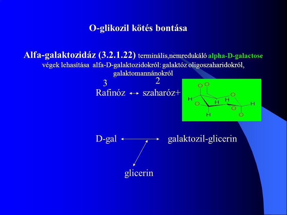 Alfa-galaktozidáz (3.2.1.22) terminális,nemredukáló alpha-D-galactose végek lehasítása alfa-D-galaktozidokról: galaktóz oligoszaharidokról, galaktoman