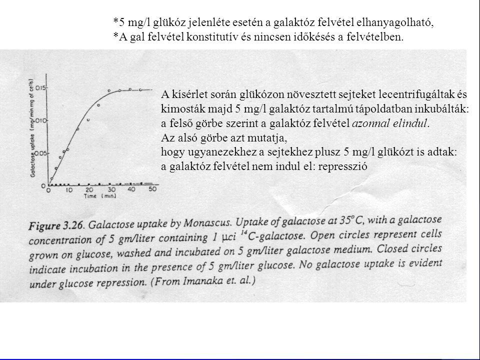 *5 mg/l glükóz jelenléte esetén a galaktóz felvétel elhanyagolható, *A gal felvétel konstitutív és nincsen időkésés a felvételben. A kísérlet során gl