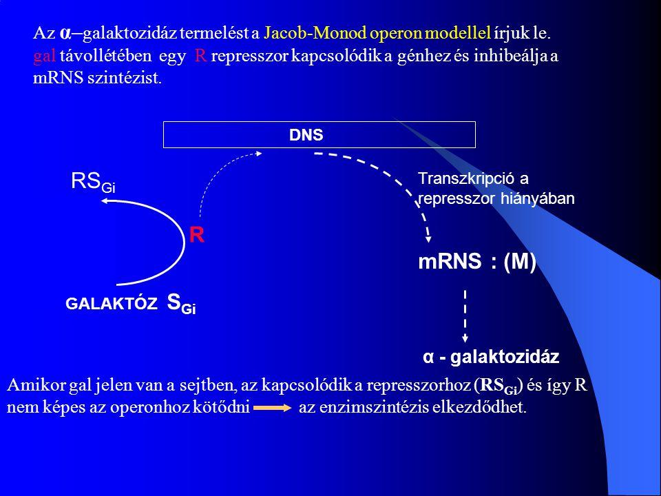 Az α– galaktozidáz termelést a Jacob-Monod operon modellel írjuk le. gal távollétében egy R represszor kapcsolódik a génhez és inhibeálja a mRNS szint