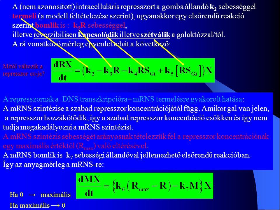 A (nem azonosított) intracelluláris represszort a gomba állandó k 2 sebességgel termeli (a modell feltételezése szerint), ugyanakkor egy elsőrendű rea