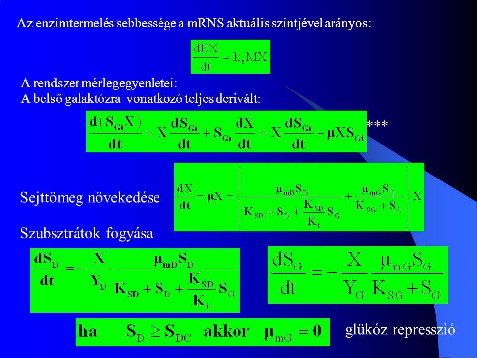 Az enzimtermelés sebbessége a mRNS aktuális szintjével arányos: A rendszer mérlegegyenletei: A belső galaktózra vonatkozó teljes derivált: glükóz repr