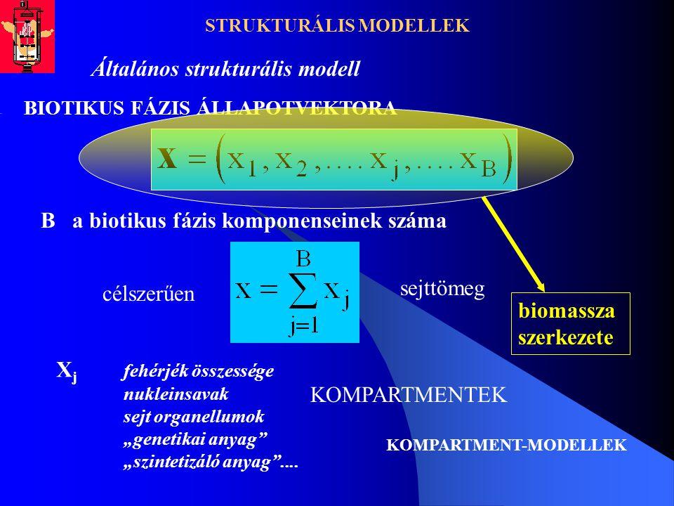 STRUKTURÁLIS MODELLEK Általános strukturális modell BIOTIKUS FÁZIS ÁLLAPOTVEKTORA B a biotikus fázis komponenseinek száma sejttömeg célszerűen X j feh