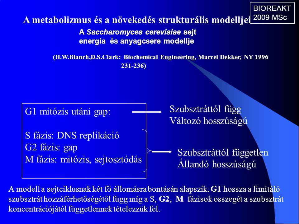 A metabolizmus és a növekedés strukturális modelljei (H.W.Blanch,D.S.Clark: Biochemical Engineering, Marcel Dekker, NY 1996 231-236) A Saccharomyces c