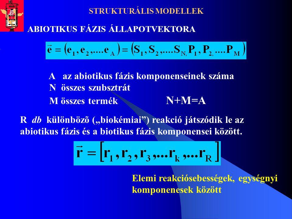STRUKTURÁLIS MODELLEK ABIOTIKUS FÁZIS ÁLLAPOTVEKTORA A az abiotikus fázis komponenseinek száma N összes szubsztrát M összes termék N+M=A R db különböz