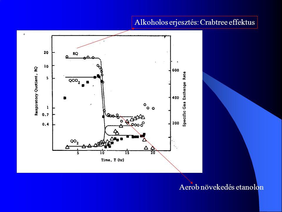 Alkoholos erjesztés: Crabtree effektus Aerob növekedés etanolon