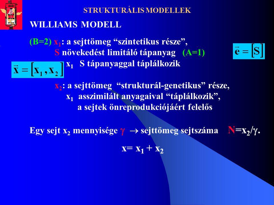 """STRUKTURÁLIS MODELLEK WILLIAMS MODELL (B=2) x 1 : a sejttömeg """"szintetikus része"""", S növekedést limitáló tápanyag (A=1) x 1 S tápanyaggal táplálkozik"""