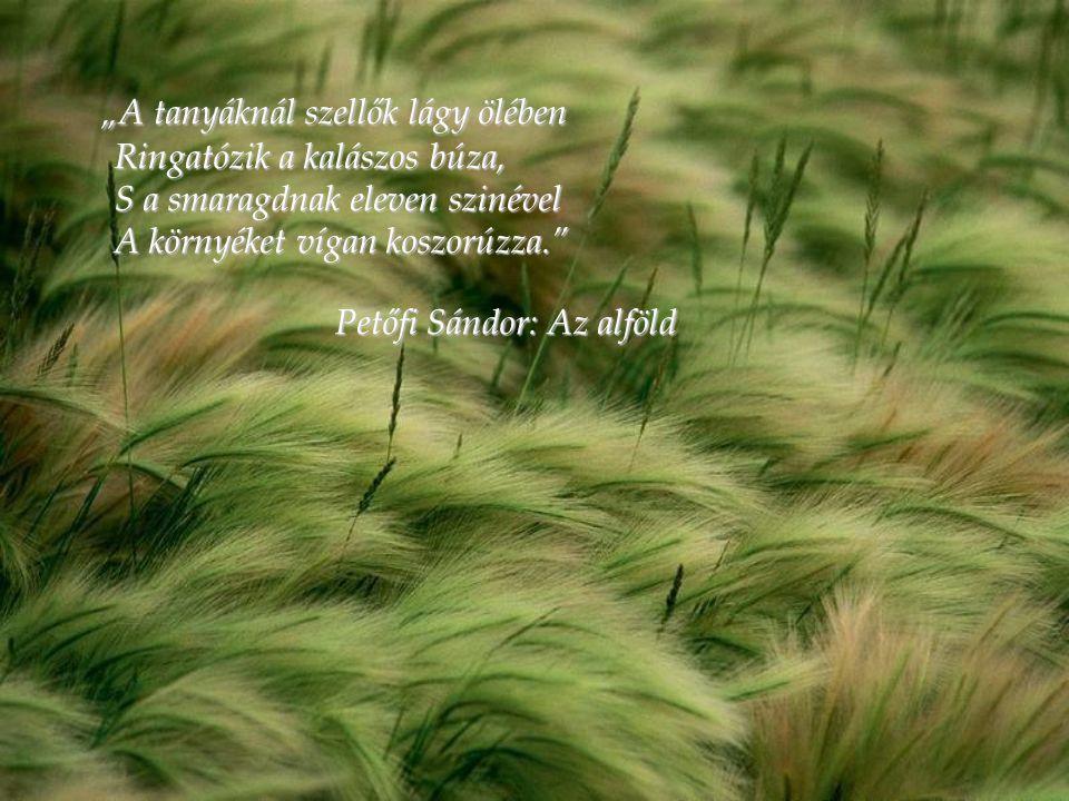 """""""A tanyáknál szellők lágy ölében Ringatózik a kalászos búza, S a smaragdnak eleven szinével A környéket vígan koszorúzza."""" Petőfi Sándor: Az alföld"""