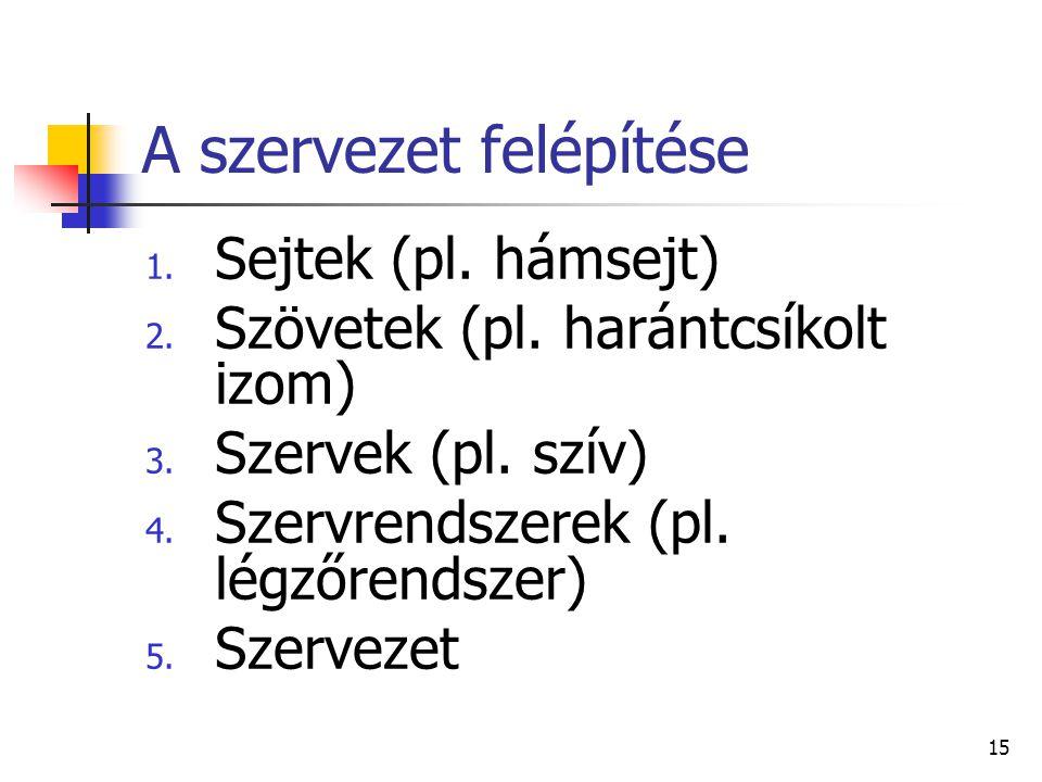 15 A szervezet felépítése 1.Sejtek (pl. hámsejt) 2.