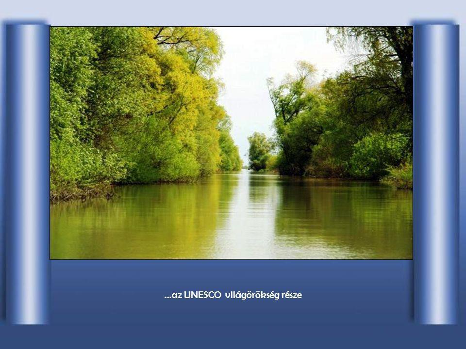 A védett terület a Duna-deltában...