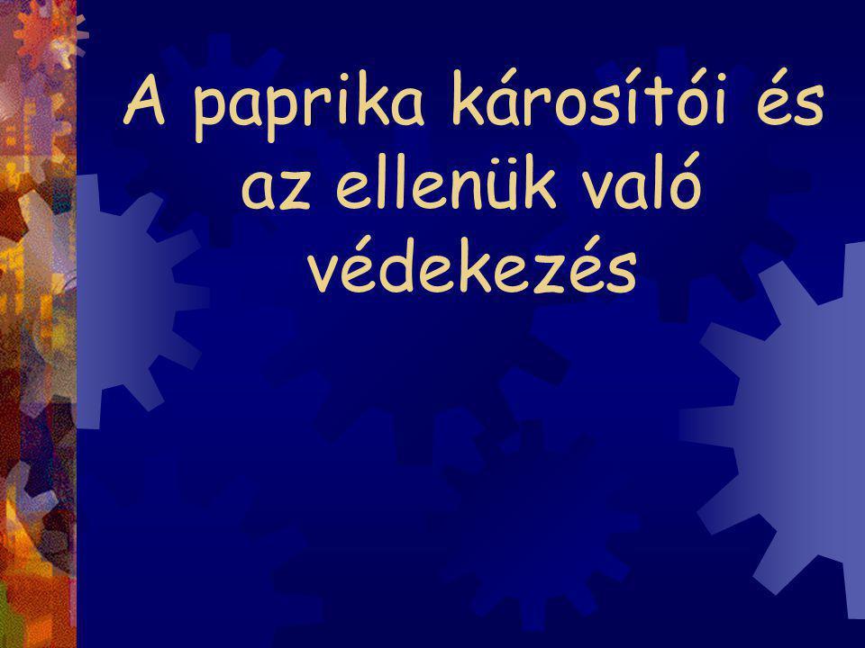 BAKTÉRIUMOS LEVÉLFOLTOSSÁG ÉS LEVÉLHULLÁS (Xanthomonas campestris pv.