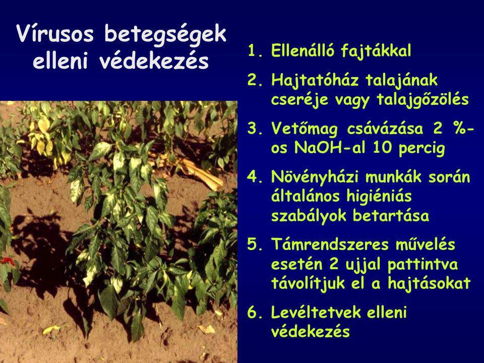 Vírusos betegségek elleni védekezés 1.Ellenálló fajtákkal 2.Hajtatóház talajának cseréje vagy talajgőzölés 3.Vetőmag csávázása 2 %- os NaOH-al 10 perc