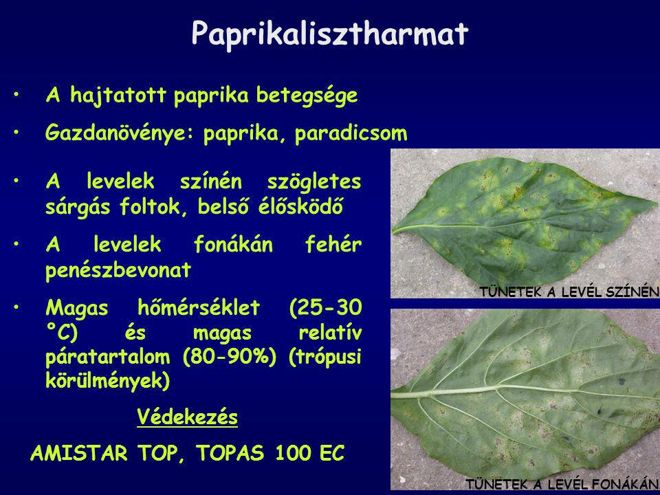 Paprikalisztharmat TÜNETEK A LEVÉL SZÍNÉN TÜNETEK A LEVÉL FONÁKÁN A hajtatott paprika betegsége Gazdanövénye: paprika, paradicsom A levelek színén szö