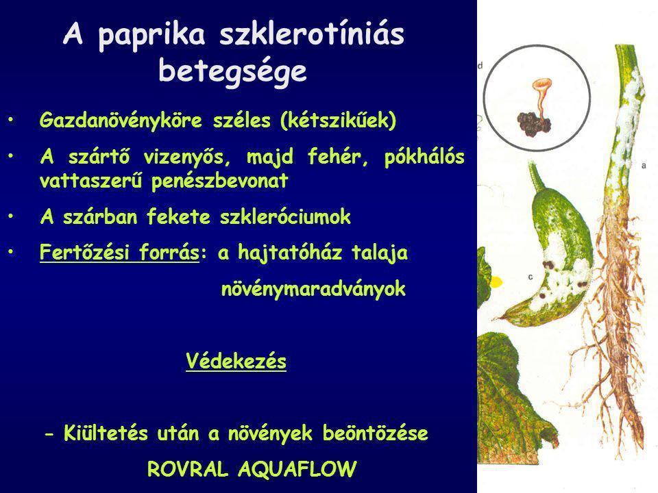 A paprika szklerotíniás betegsége Gazdanövényköre széles (kétszikűek) A szártő vizenyős, majd fehér, pókhálós vattaszerű penészbevonat A szárban feket