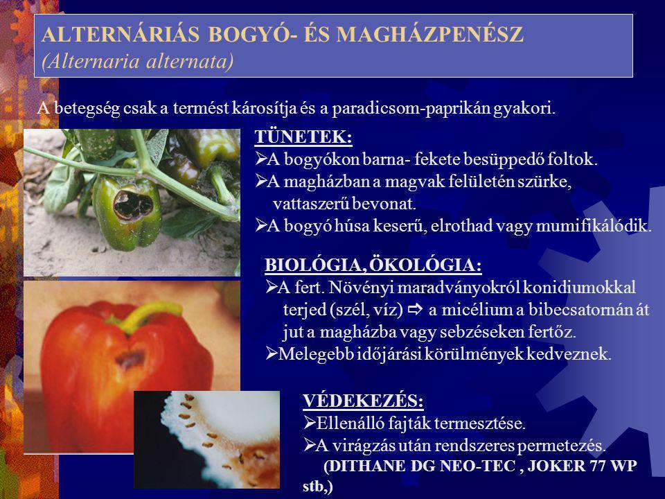 ALTERNÁRIÁS BOGYÓ- ÉS MAGHÁZPENÉSZ (Alternaria alternata) A betegség csak a termést károsítja és a paradicsom-paprikán gyakori. TÜNETEK:  A bogyókon
