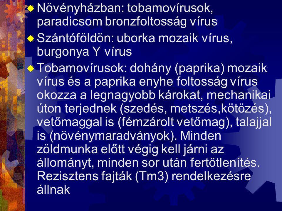 Baktériumos betegségek elleni védekezés -A betegség leküzdése csak megelőző (preventív) védekezéssel eredményes -A kockázati tényezők (léghőmérséklet, levélfelület nedvesség, csapadék, levegő magas páratartalma) Kémiai védekezés RÉZOXIKLORID 50 WP