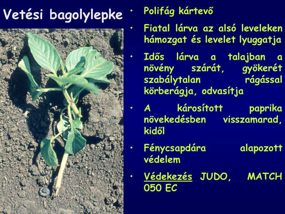 Vetési bagolylepke Polifág kártevő Fiatal lárva az alsó leveleken hámozgat és levelet lyuggatja Idős lárva a talajban a növény szárát, gyökerét szabál