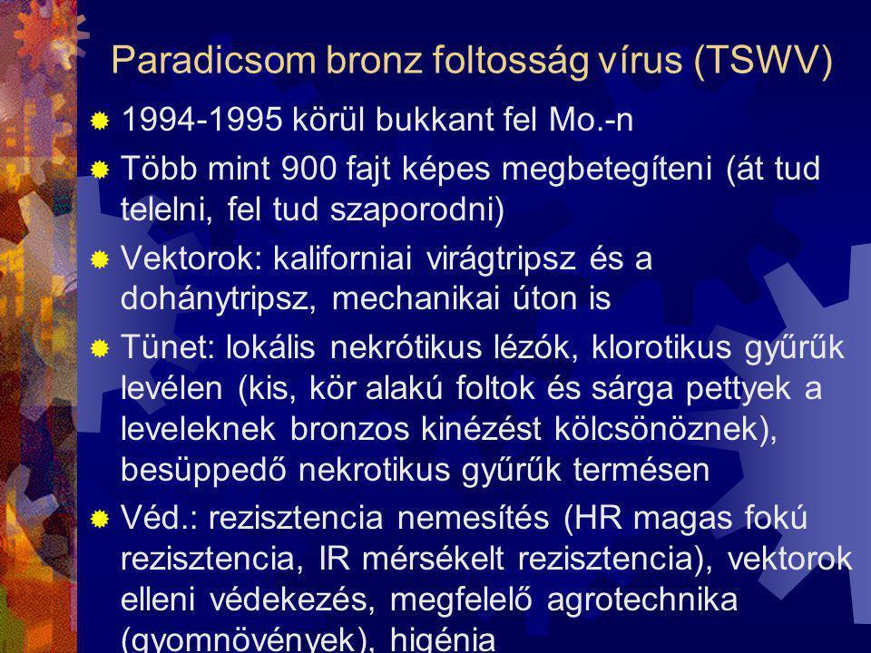 Paradicsom bronz foltosság vírus (TSWV)  1994-1995 körül bukkant fel Mo.-n  Több mint 900 fajt képes megbetegíteni (át tud telelni, fel tud szaporod